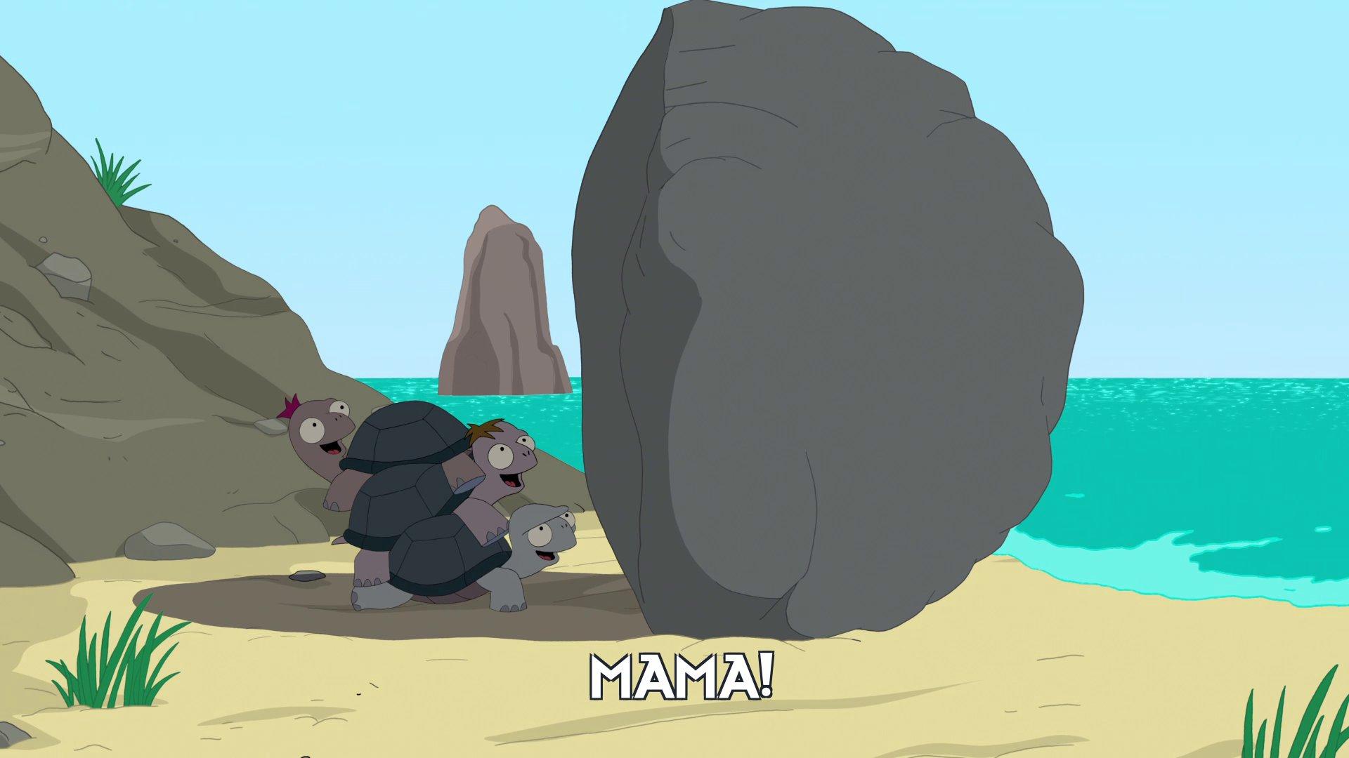 Tortoises: Mama!